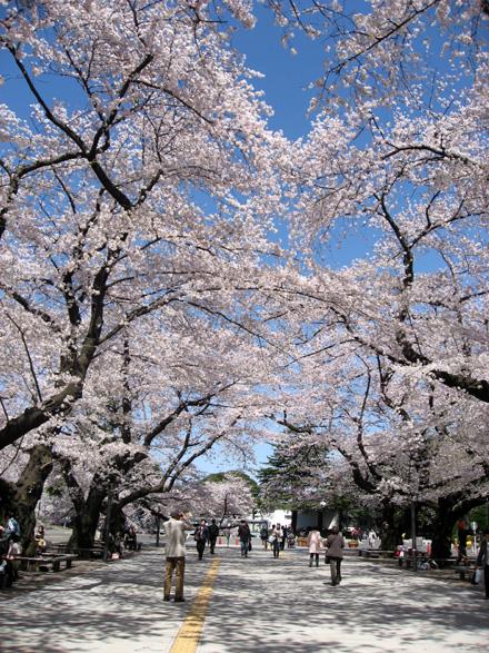 Sakura20081_2