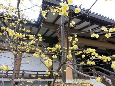 Kyoto201406