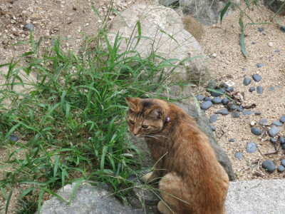 Matsuyamacat1