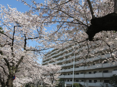 Sakura201502